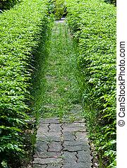 The walkway in the garden