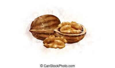 The Walnut illustration appearance - Beautiful appearance of...