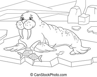 The walrus flippered marine mammal with a discontinuous...