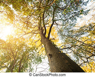 The warm spring sun shining through the canopy of tall trees