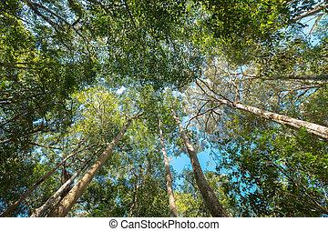The warm spring sun shining through trees, tree looking up