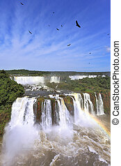 Roaring falls in South America - Iguazu. Foamy streams fall between the green jungle. The magnificent rainbow is shone in a water dust
