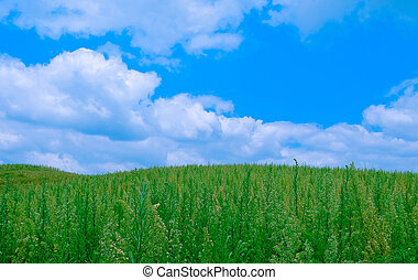 The Weedy Grass Field under Cloudy Blue Sky.