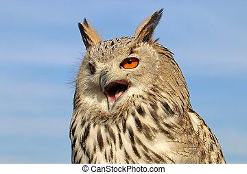 The western Siberian eagle-owl