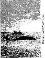 The whale stood one cable, vintage engraving.