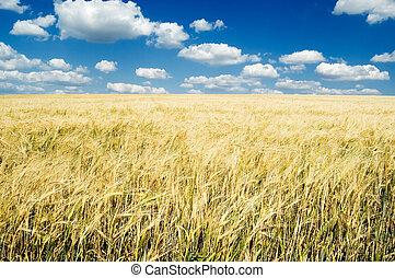 The wheat field.