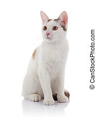 The white cat with yellow eyes
