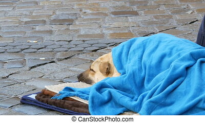 The white dog of homeless person, covered with a blue...