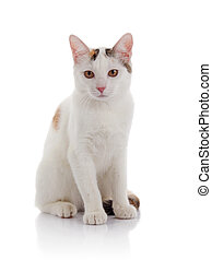 The white domestic cat with yellow eyes