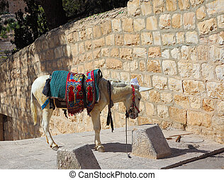 The white donkey in an ancient harness