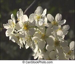 The White flowerses.