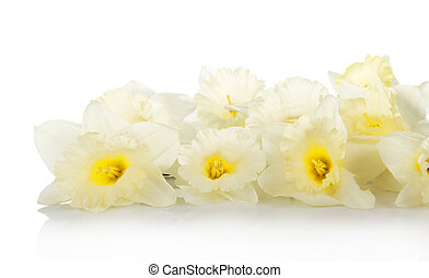 The white, gentle spring flowers