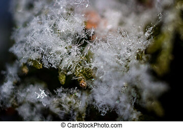 The White snowflakes in nature close up