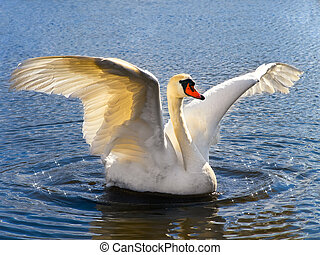 the white swan on the blue water