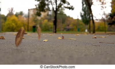 The wind rises autumn yellow leaves from the asphalt in the park