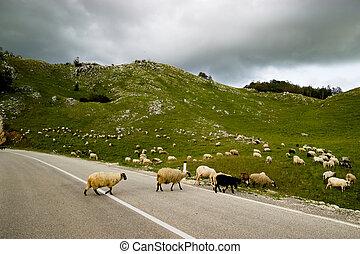 The winding road in Montenegro