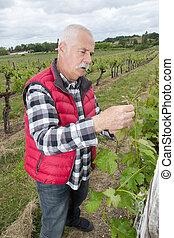 the wine grower