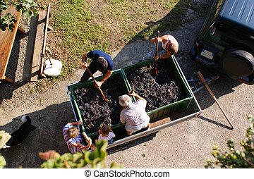The wine-making process