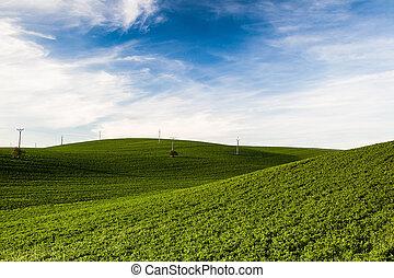 The wine region in Moravia