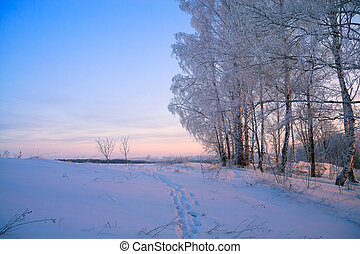 winter rural landscape with a sunset in the forest