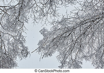 the winter tree in snow from russia