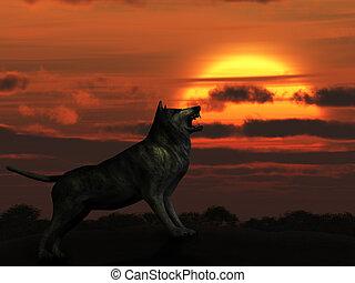 The wolf on sunset