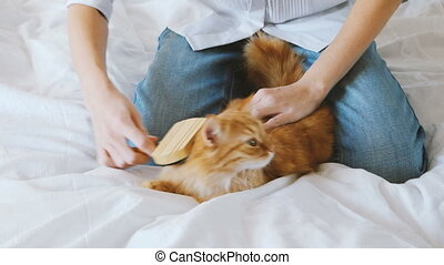 The Woman Combs A Dozing Cat's Fur. Ginger Cat Lies On White Blanket