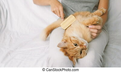 The Woman Combs A Dozing Cat's Fur. Ginger Cat Lies On Woman Legs