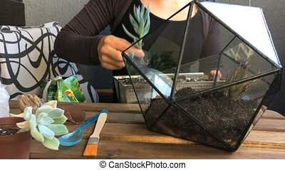 The woman florist plants succulents to the glass geometric...