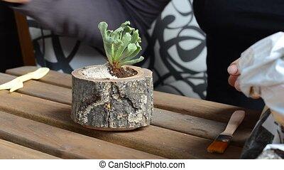 The woman florist pours a decorative stones to a wooden...