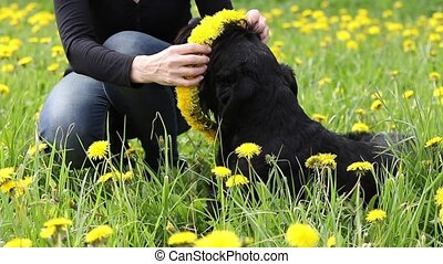 The woman is giving a dandelion wreath to a dog