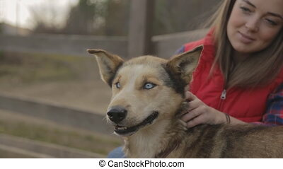The woman is scratching the dog turning its head which has brown, colorful fur and light blue eyes. It is satisfied and pleased being next to the owner who is a beautiful, young female wearing red vast and blue plaid shirt and brown loose hair. They are happy together outside the city, in the open ...