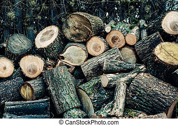 The wood is sawn into many small pieces