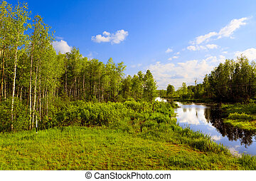 The wood river in a summer sunny day