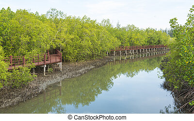 The wooden bridge in the mangrove forest