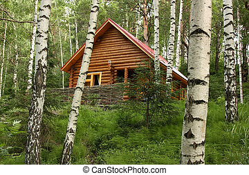 The wooden house in a forest