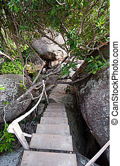 the wooden path to top of mountain, Similan Thailand