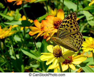 The world looks like paradise to the butterfly sitting on the flowers of the meadow