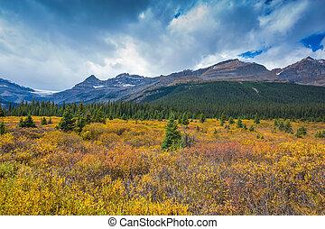 The yellow autumn vegetation around Bow Lake