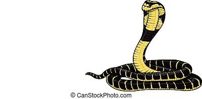 cobra - The yellow-black cobra. A highly venomous snake.
