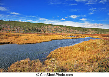 The yellow grass and a stream in Yellowstone national park