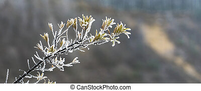 The yellow leaves of the shrub in white crystals of frost.