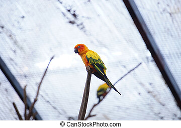 The yellow parrot bird  sun conure on the branch.