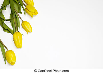 the Yellow tulips on a white background