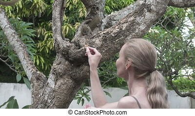 The young woman feeds with nuts common treeshrew in a...