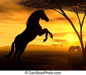 The Zebra - Illustration of an african zebra