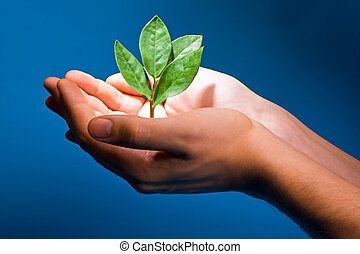 Theme of growth - Photo of hands of the man with a young...