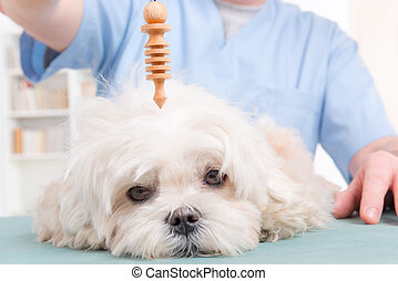 Therapist or vet using pendulum