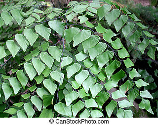 green leaves and branches of a plant