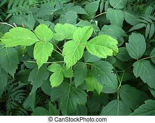 green leaves and branches of a tree